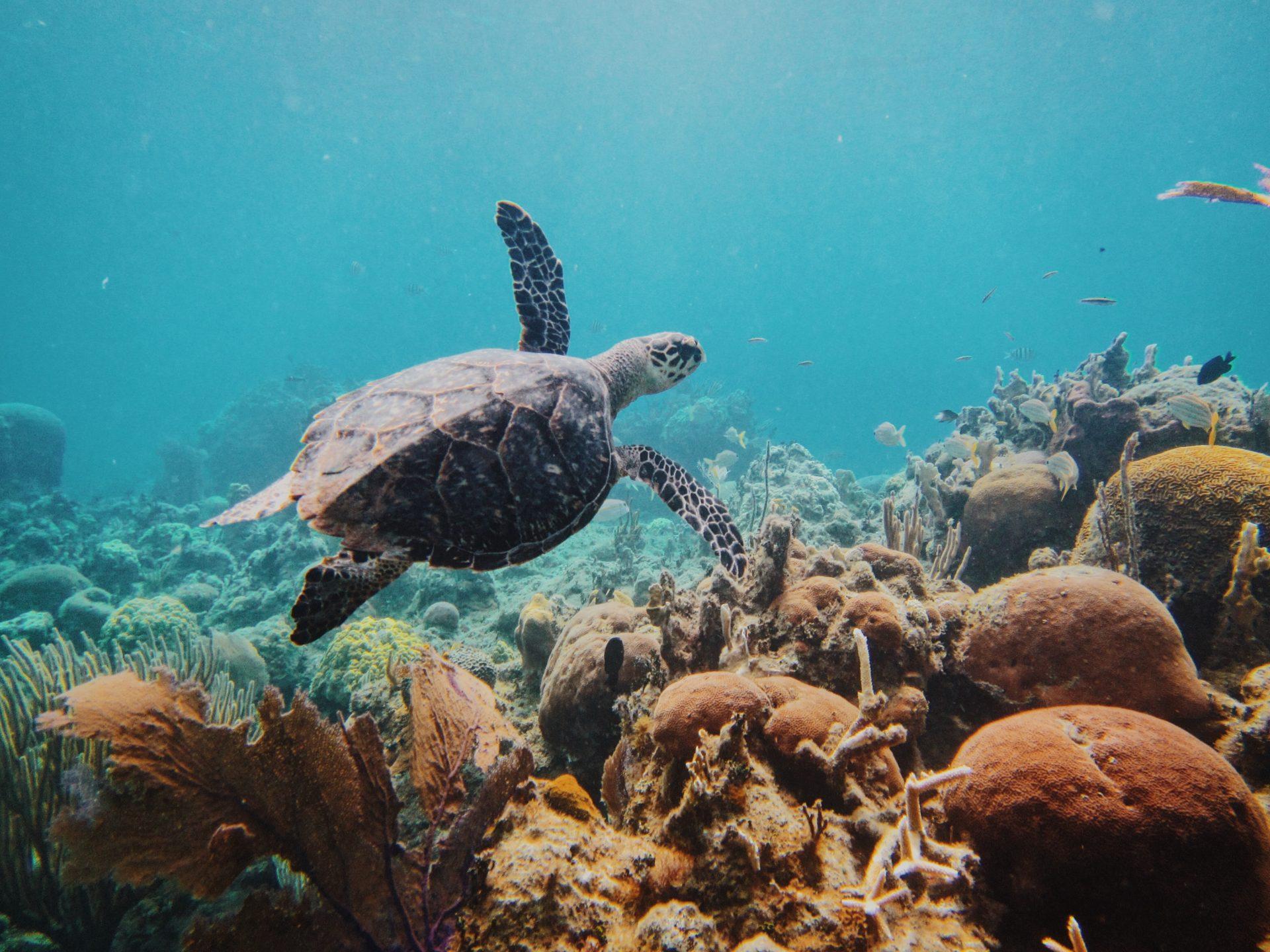 Biodiversità - mare - tartaruga
