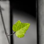 PRESENTAZIONE DEL GREEN PLANNER 2018 A TORINO